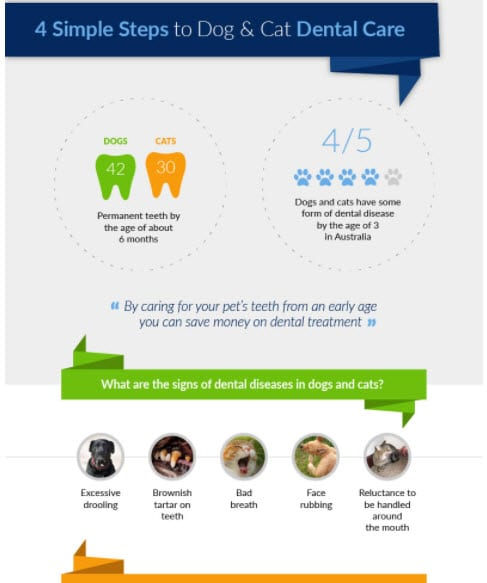 infographic for vet practice